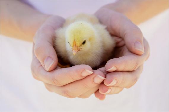 FFCテクノロジーを活用した飼育方法